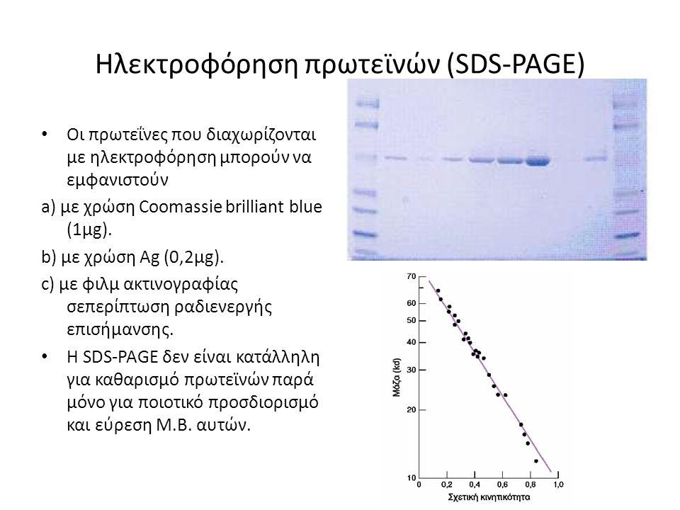 Ηλεκτροφόρηση πρωτεϊνών (SDS-PAGE) Οι πρωτεΐνες που διαχωρίζονται με ηλεκτροφόρηση μπορούν να εμφανιστούν a) με χρώση Coomassie brilliant blue (1μg).