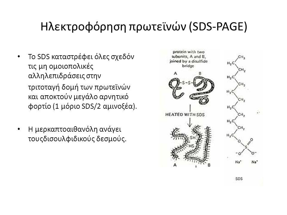 Ηλεκτροφόρηση πρωτεϊνών (SDS-PAGE) Το SDS καταστρέφει όλες σχεδόν τις μη ομοιοπολικές αλληλεπιδράσεις στην τριτοταγή δομή των πρωτεϊνών και αποκτούν μ