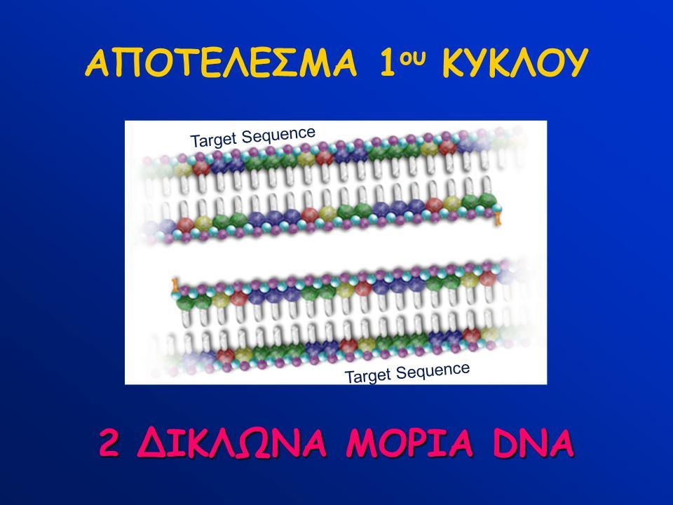 Target Sequence ΑΠΟΤΕΛΕΣΜΑ 1 ου ΚΥΚΛΟΥ 2 ΔΙΚΛΩΝΑ ΜΟΡΙΑ DNA