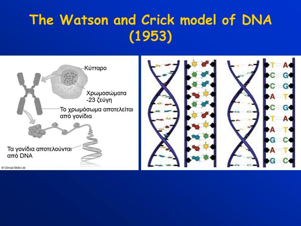 ΣΥΝΘΗΚΕΣ ΑΝΤΙΔΡΑΣΗΣ PCR Ένα τυπικό πείραμα PCR περιέχει τα ακόλουθα συστατικά: DNA (0,01 – 0,1 μg) PRIMER 1-FORWARD (20 pmol) PRIMER 2-REVERSE (20 pmol) Tris – HCL (20mM, pH 8) MgCl 2 (2 mM) 50μM dATP, dCTP, dGTP, dTTP.