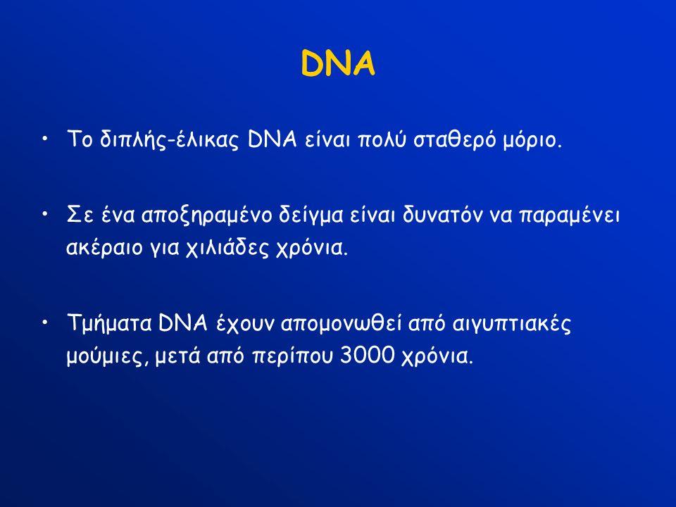 DNA Το διπλής-έλικας DNA είναι πολύ σταθερό μόριο. Σε ένα αποξηραμένο δείγμα είναι δυνατόν να παραμένει ακέραιο για χιλιάδες χρόνια. Τμήματα DNA έχουν