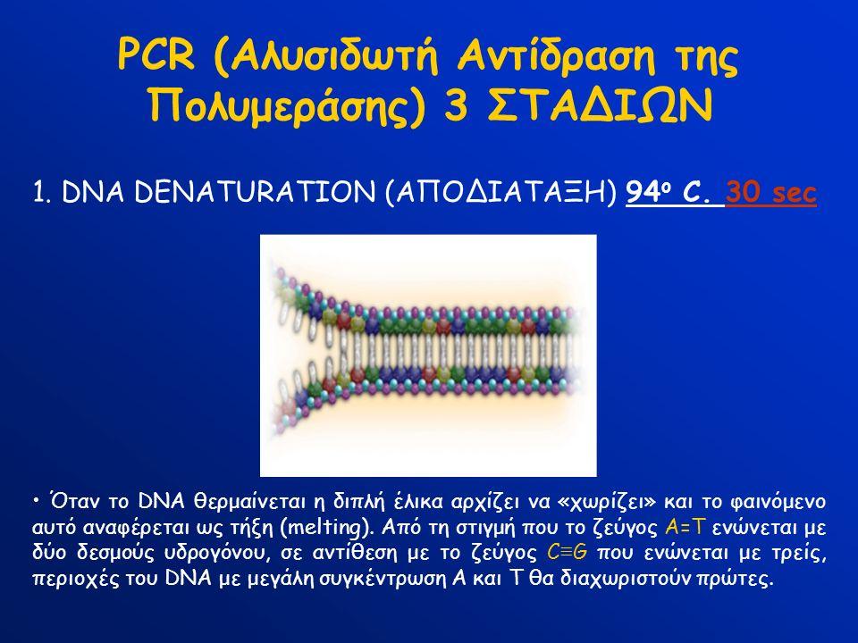 PCR (Αλυσιδωτή Αντίδραση της Πολυμεράσης) 3 ΣΤΑΔΙΩΝ 1. DNA DENATURATION (ΑΠΟΔΙΑΤΑΞΗ) 94 ο C. 30 sec Όταν το DNA θερμαίνεται η διπλή έλικα αρχίζει να «