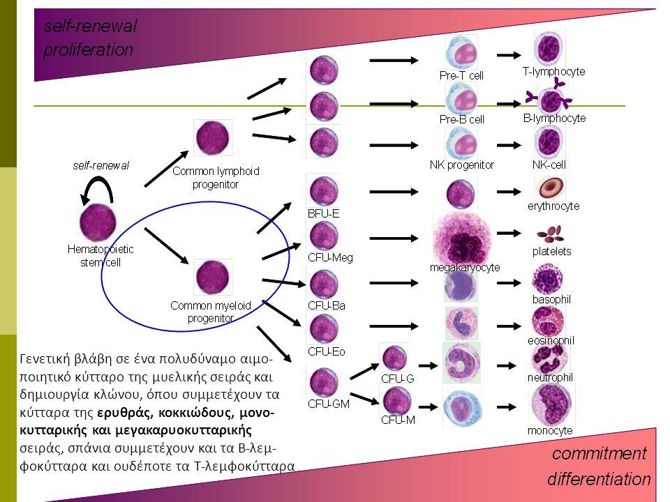 Γενετική βλάβη σε ένα πολυδύναμο αιμο- ποιητικό κύτταρο της μυελικής σειράς και δημιουργία κλώνου, όπου συμμετέχουν τα κύτταρα της ερυθράς, κοκκιώδους, μονο- κυτταρικής και μεγακαρυοκυτταρικής σειράς, σπάνια συμμετέχουν και τα Β-λεμ- φοκύτταρα και ουδέποτε τα Τ-λεμφοκύτταρα