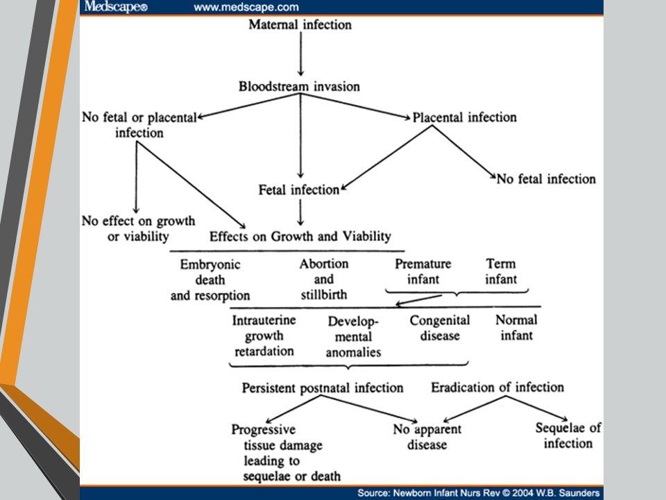CMV Κυτταρομεγαλοιός