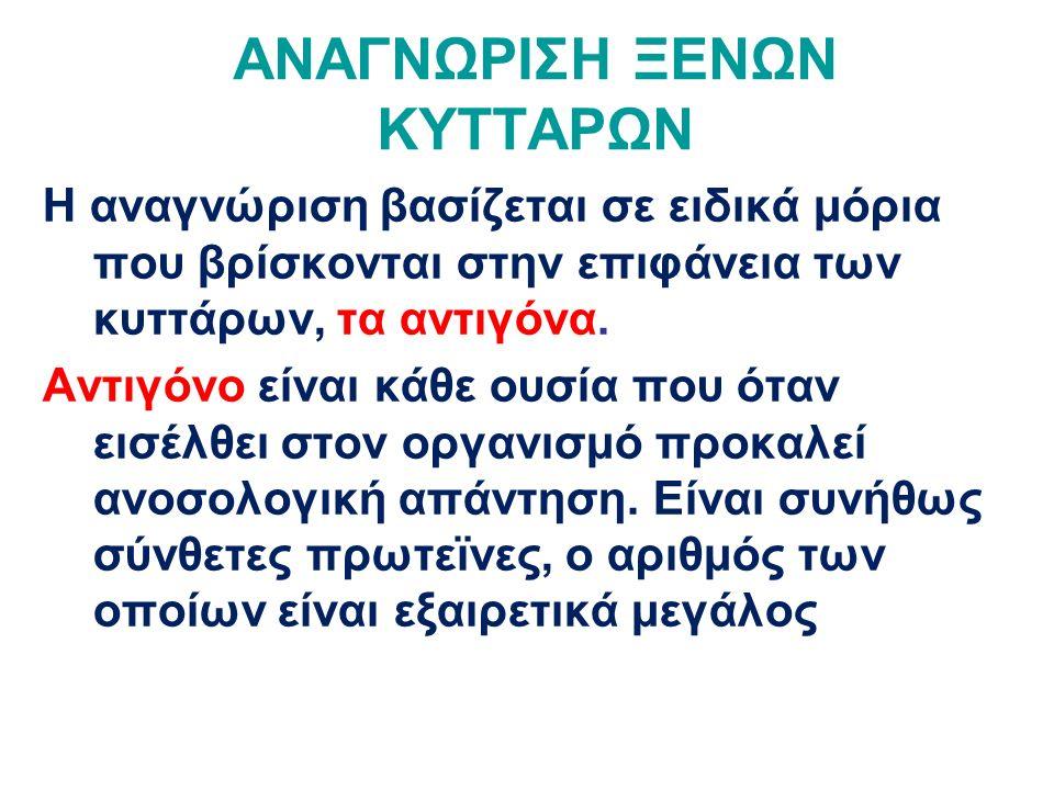 ΑΝΤΙΓΟΝΟ H Είναι γενετικά ανεξάρτητο από το ΑΒΟ Αποτελεί προϋπόθεση για την ύπαρξη των αντιγόνων Α και Β Επί απουσίας του Η, η δημιουργία των άλλων δύο είναι αδύνατη