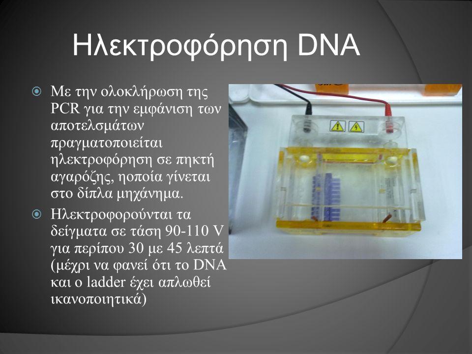 Ηλεκτροφόρηση DNA  Με την ολοκλήρωση της PCR για την εμφάνιση των αποτελσμάτων πραγματοποιείται ηλεκτροφόρηση σε πηκτή αγαρόζης, ηοποία γίνεται στο δ