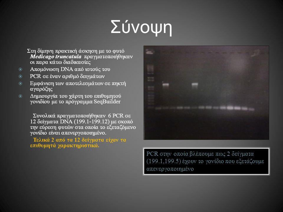 Σύνοψη PCR στην οποία βλέπουμε πως 2 δείγματα (199.1,199.5) έχουν το γονίδιο που εξετάζουμε απενεργοποιημένο Στη δίμηνη πρακτική άσκηση με το φυτό Med