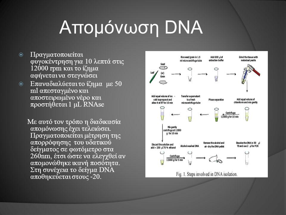 Απομόνωση DNA  Πραγματοποιείται φυγοκέντρηση για 10 λεπτά στις 12000 rpm και το ίζημα αφήνεται να στεγνώσει  Επαναδιαλύεται το ίζημα με 50 ml απεστα