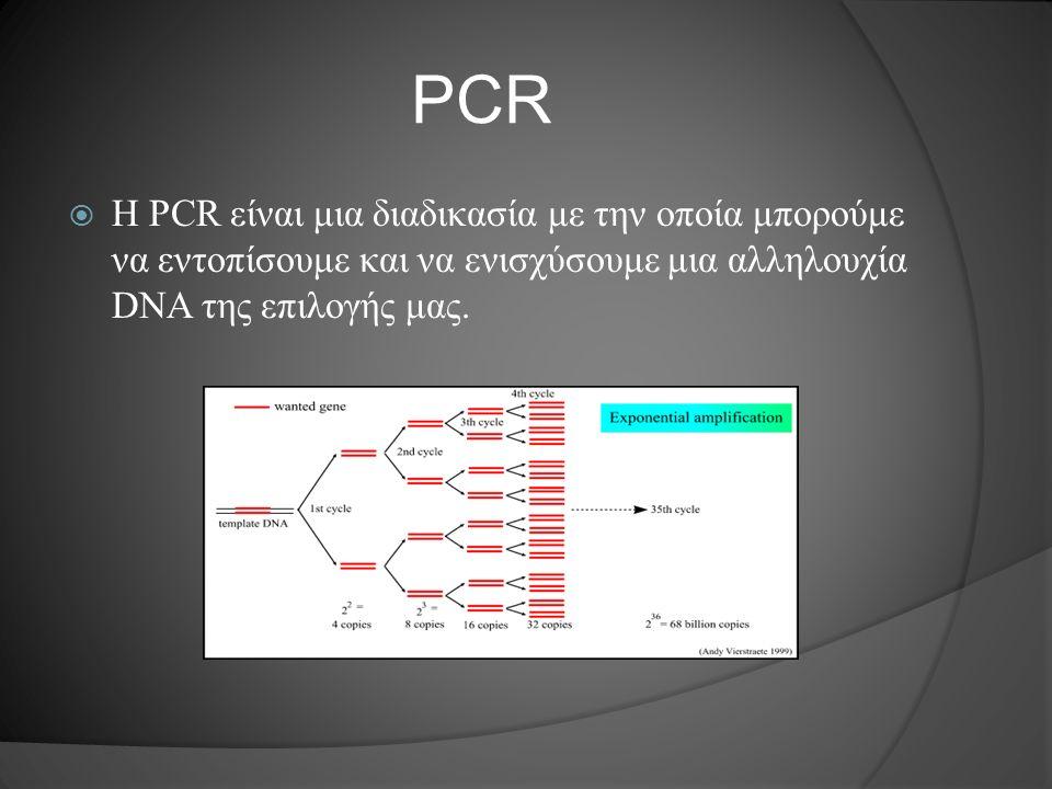 Πρωτόκολλο της PCR παρατήρηση: όλα τα παραπάνω πραγματοποιούνται δουλεύοντας με όλα τα διαλύματα σε πάγο για να μην επηρεαστούν από τη θερμοκρασία Ξεκινώντας στο PCR tube προστήθονται αρχικά οι εκκινητές, dNTP's και ένα διάλυμα (buffer) που κρατά σταθερές τις συνθήκες κατά τη διάρκεια της διαδικασίας.