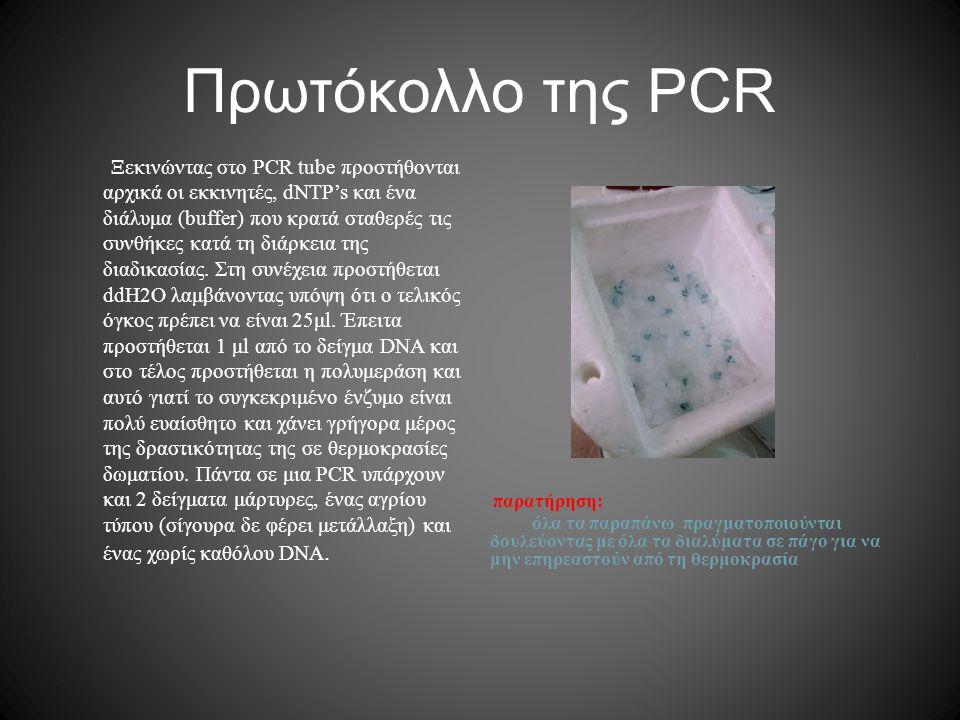 Πρωτόκολλο της PCR παρατήρηση: όλα τα παραπάνω πραγματοποιούνται δουλεύοντας με όλα τα διαλύματα σε πάγο για να μην επηρεαστούν από τη θερμοκρασία Ξεκ