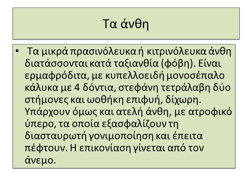 Κλαδιά ελιάς στη σημαία της Κύπρου Η σημαία της Κύπρου έχει κάτω από το χάρτη της Κύπρου, δυο κλαδιά ελιάς σταυρωτά.