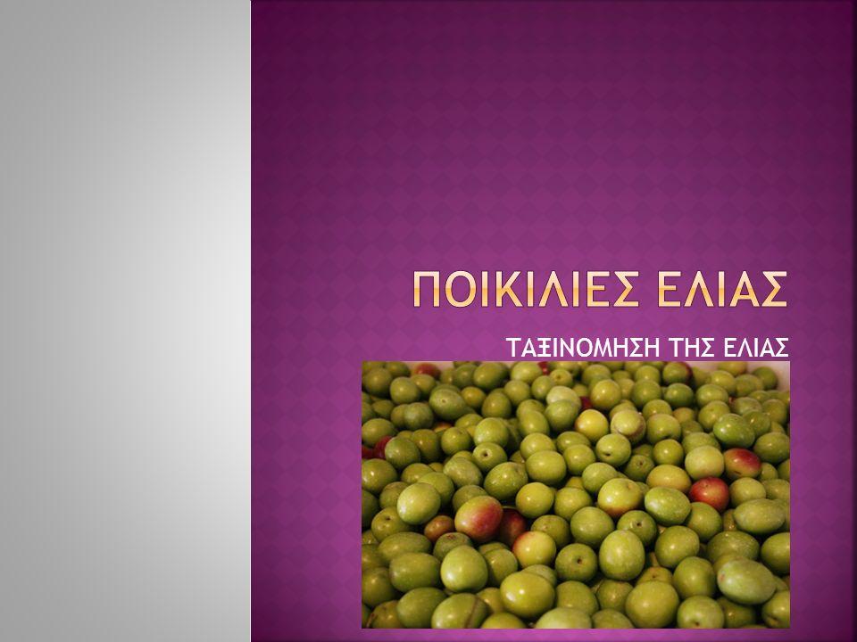  Συνωνυμίες: Αετονύχι,καλαμαριανή,κορακολιά, τσιγκέλι, χοντρολιά  Δένδρο: ύψος 7-10 m.Ζωηρή βλάστηση με μεγάλα φύλλα  Καρπός: σχήμα μονόπλευρο, κυρτό.