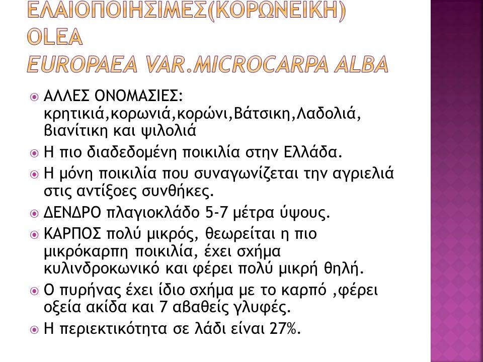  ΑΛΛΕΣ ΟΝΟΜΑΣΙΕΣ: κρητικιά,κορωνιά,κορώνι,Βάτσικη,Λαδολιά, βιανίτικη και ψιλολιά  Η πιο διαδεδομένη ποικιλία στην Ελλάδα.  Η μόνη ποικιλία που συνα