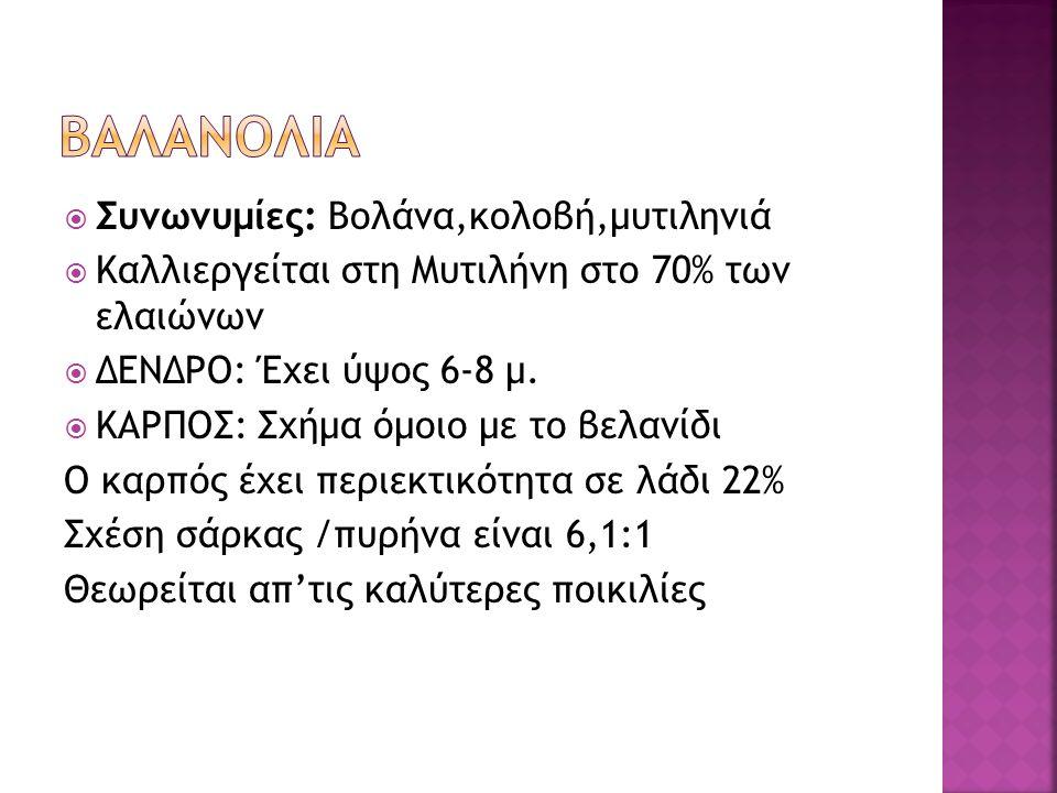  Συνωνυμίες: Βολάνα,κολοβή,μυτιληνιά  Καλλιεργείται στη Μυτιλήνη στο 70% των ελαιώνων  ΔΕΝΔΡΟ: Έχει ύψος 6-8 μ.  ΚΑΡΠΟΣ: Σχήμα όμοιο με το βελανίδ