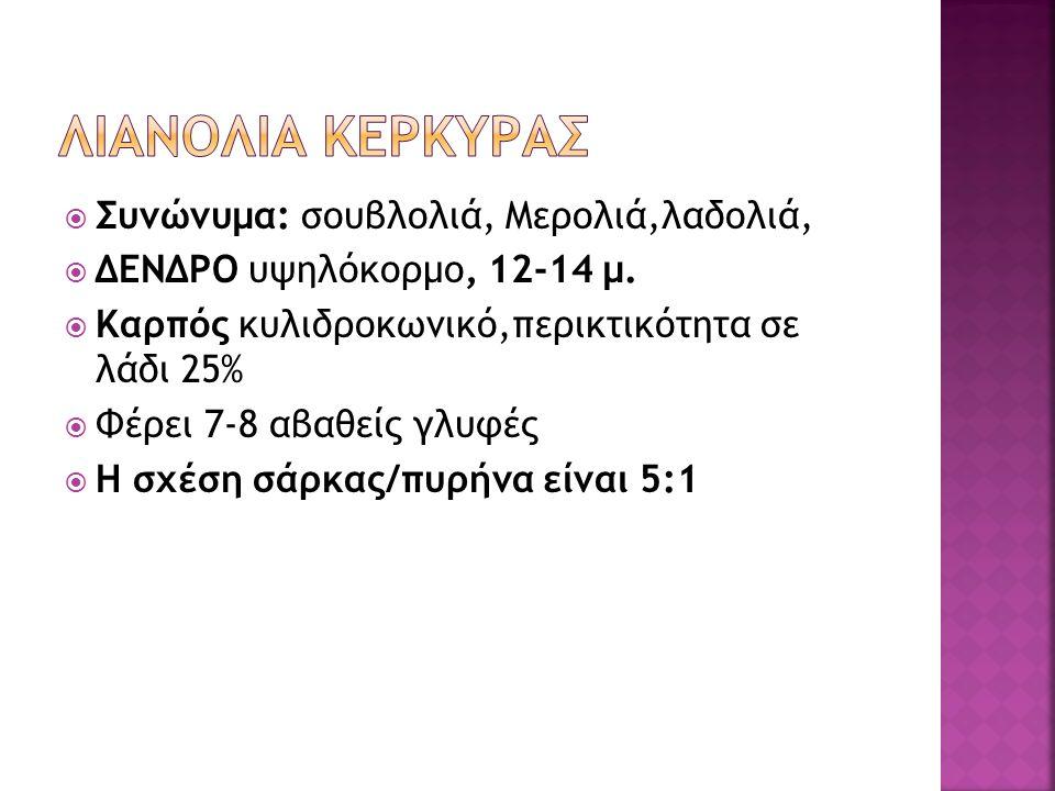  Συνώνυμα: σουβλολιά, Μερολιά,λαδολιά,  ΔΕΝΔΡΟ υψηλόκορμο, 12-14 μ.  Καρπός κυλιδροκωνικό,περικτικότητα σε λάδι 25%  Φέρει 7-8 αβαθείς γλυφές  Η