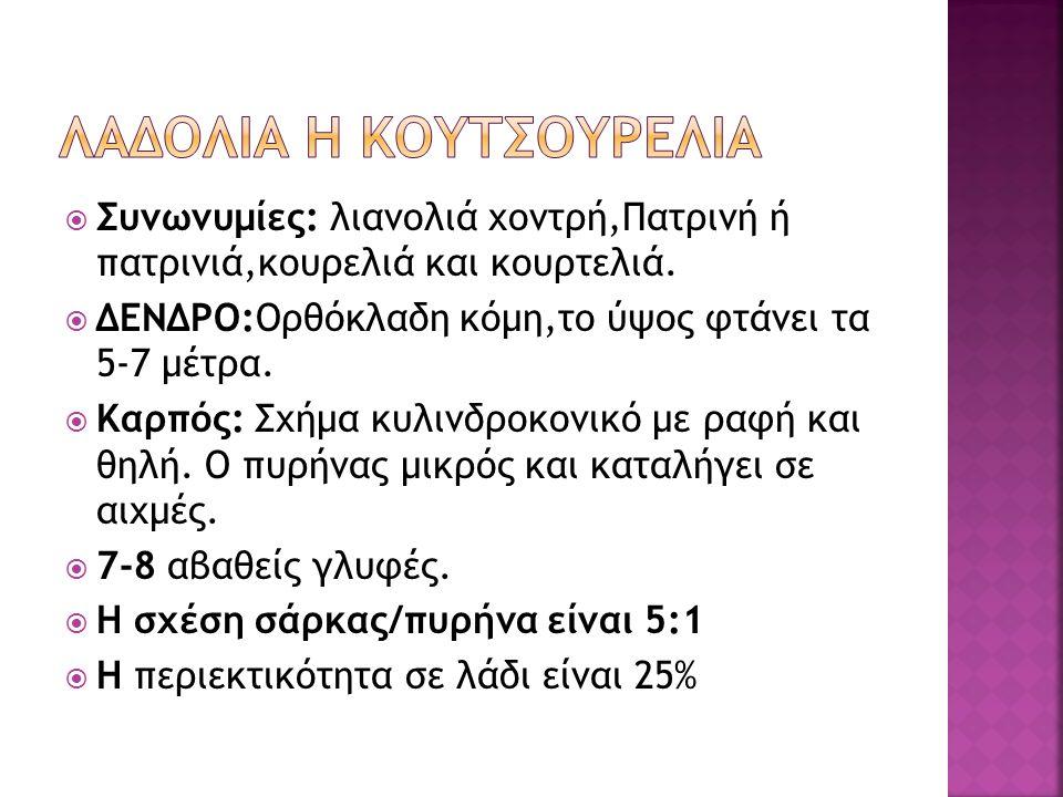  Συνωνυμίες: λιανολιά χοντρή,Πατρινή ή πατρινιά,κουρελιά και κουρτελιά.  ΔΕΝΔΡΟ:Ορθόκλαδη κόμη,το ύψος φτάνει τα 5-7 μέτρα.  Καρπός: Σχήμα κυλινδρο
