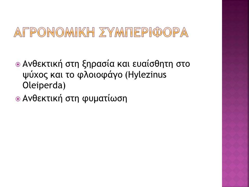  Ανθεκτική στη ξηρασία και ευαίσθητη στο ψύχος και το φλοιοφάγο (Hylezinus Oleiperda)  Ανθεκτική στη φυματίωση