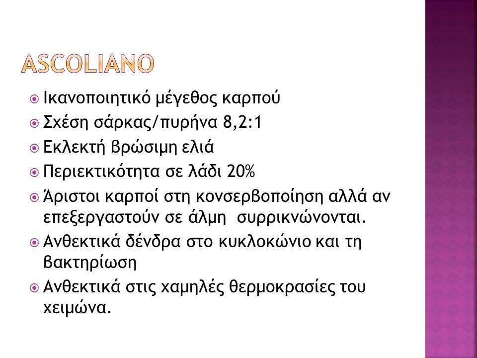  Ικανοποιητικό μέγεθος καρπού  Σχέση σάρκας/πυρήνα 8,2:1  Εκλεκτή βρώσιμη ελιά  Περιεκτικότητα σε λάδι 20%  Άριστοι καρποί στη κονσερβοποίηση αλλ