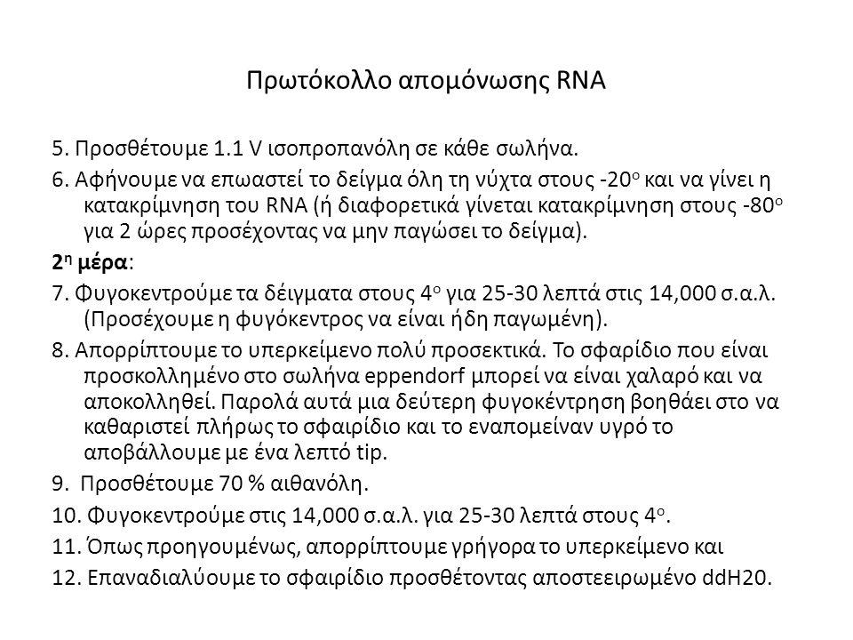 Πρωτόκολλο απομόνωσης RNA 5. Προσθέτουμε 1.1 V ισοπροπανόλη σε κάθε σωλήνα. 6. Αφήνουμε να επωαστεί το δείγμα όλη τη νύχτα στους -20 ο και να γίνει η