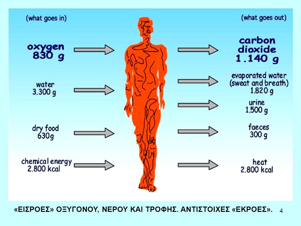 5 Διατροφή και ενέργεια Η ενέργεια που περιέχεται στις πεφθείσες θρεπτικές ουσίες εμφανίζεται τουλάχιστον ως θερμότητα που αποβάλλεται στο περιβάλλον, αλλά και ως μηχανικό έργο, ή ως αύξηση σώματος.