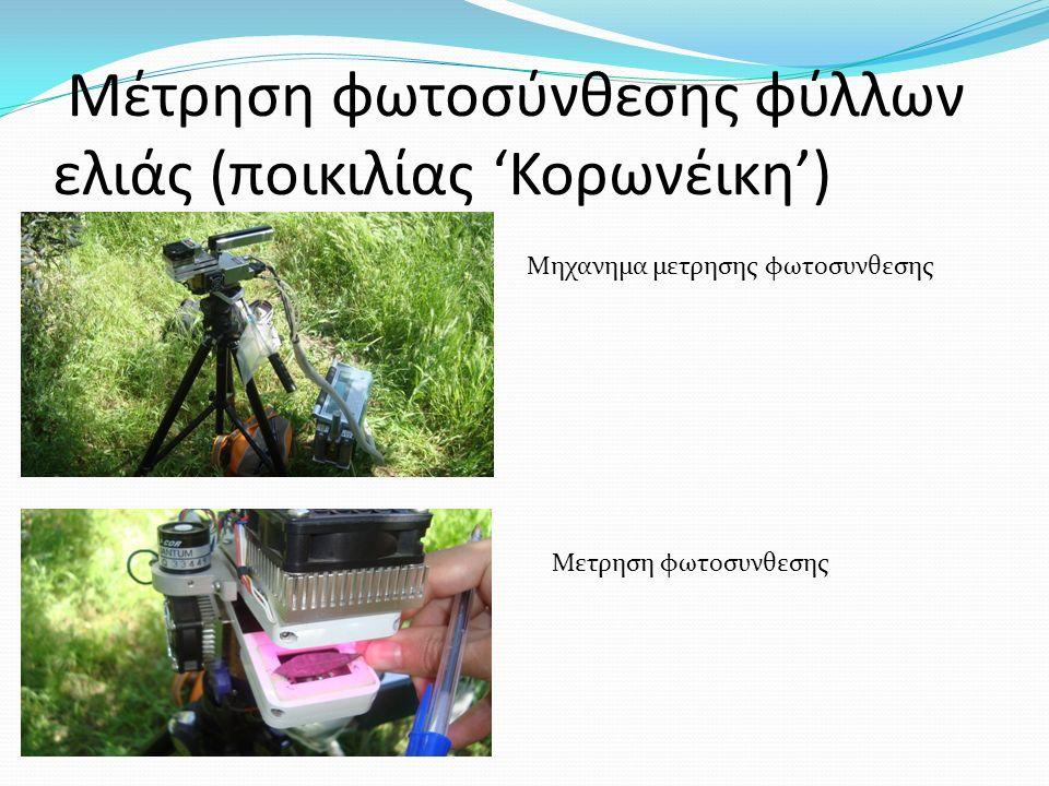 Μέτρηση φωτοσύνθεσης φύλλων ελιάς (ποικιλίας 'Κορωνέικη') Μηχανημα μετρησης φωτοσυνθεσης Μετρηση φωτοσυνθεσης