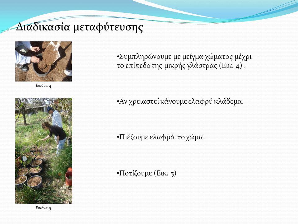Εικόνα 5 Εικόνα 4 Συμπληρώνουμε με μείγμα χώματος μέχρι το επίπεδο της μικρής γλάστρας (Εικ. 4). Αν χρειαστεί κάνουμε ελαφρύ κλάδεμα. Πιέζουμε ελαφρά