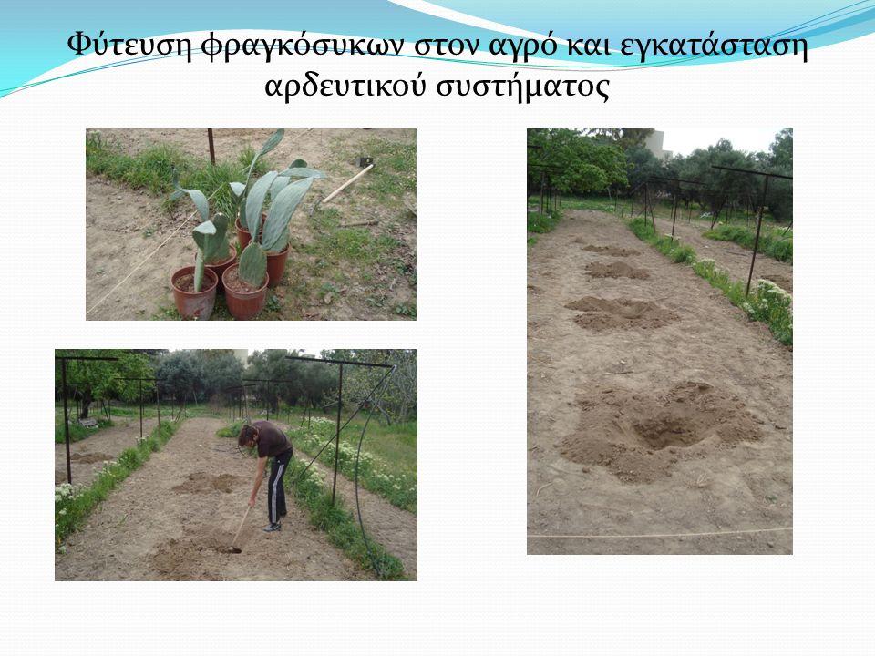 Φύτευση φραγκόσυκων στον αγρό και εγκατάσταση αρδευτικού συστήματος