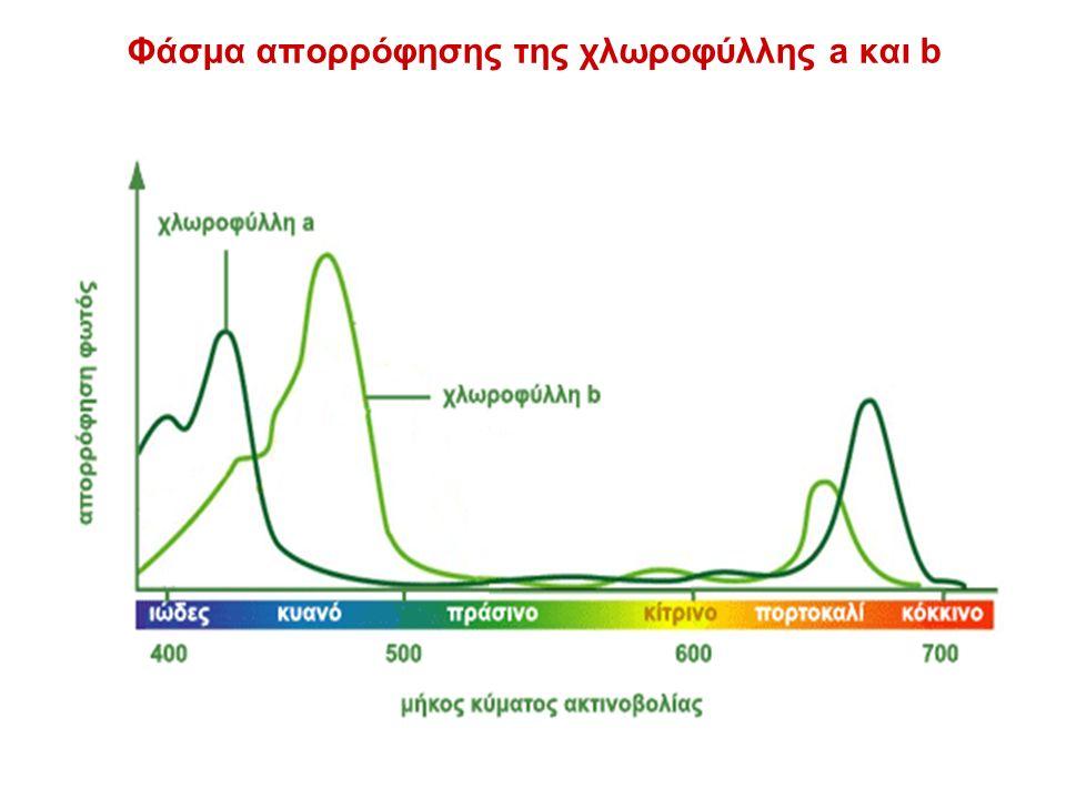 Φάσμα απορρόφησης της χλωροφύλλης a και b