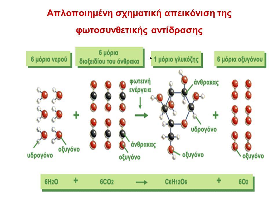 Απλοποιημένη σχηματική απεικόνιση της φωτοσυνθετικής αντίδρασης