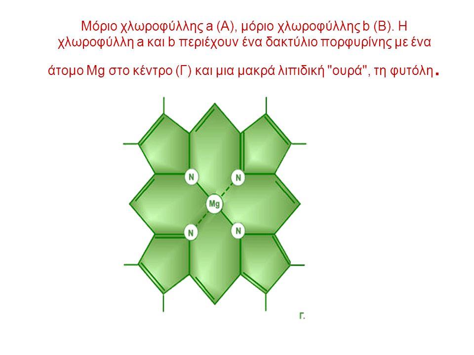 Μόριο χλωροφύλλης a (A), μόριο χλωροφύλλης b (B).