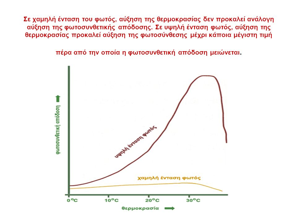 Σε χαμηλή ένταση του φωτός, αύξηση της θερμοκρασίας δεν προκαλεί ανάλογη αύξηση της φωτοσυνθετικής απόδοσης.