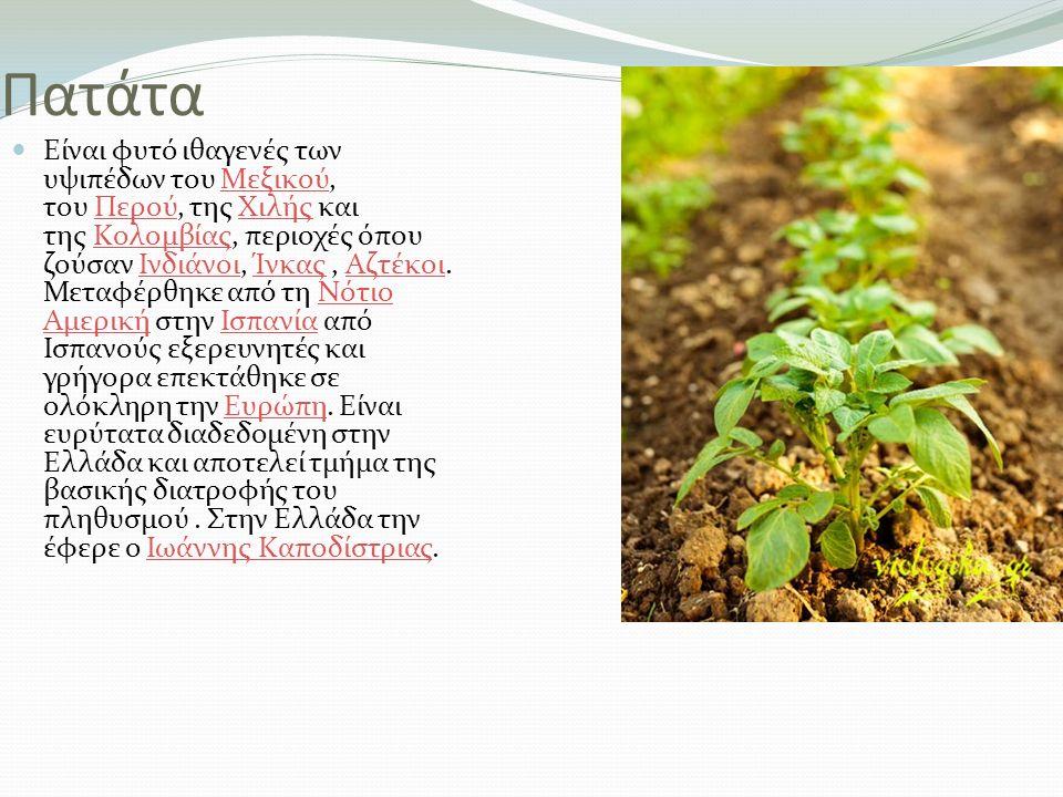 Πατάτα Είναι φυτό ιθαγενές των υψιπέδων του Mεξικού, του Περού, της Xιλής και της Kολομβίας, περιοχές όπου ζούσαν Ινδιάνοι, Ίνκας, Αζτέκοι. Μεταφέρθηκ