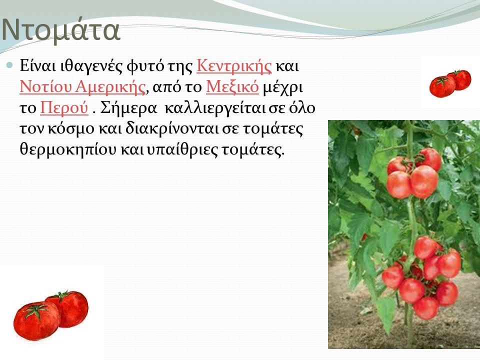 Ντομάτα Είναι ιθαγενές φυτό της Κεντρικής και Νοτίου Αμερικής, από το Μεξικό μέχρι το Περού. Σήμερα καλλιεργείται σε όλο τον κόσμο και διακρίνονται σε