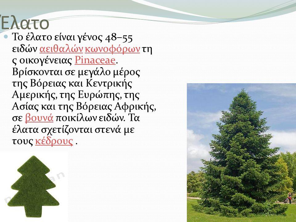 Έλατο Το έλατο είναι γένος 48–55 ειδών αειθαλών κωνοφόρων τη ς οικογένειας Pinaceae. Βρίσκονται σε μεγάλο μέρος της Βόρειας και Κεντρικής Αμερικής, τη