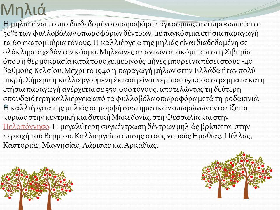 Mηλιά Η μηλιά είναι το πιο διαδεδομένο οπωροφόρο παγκοσμίως, αντιπροσωπεύει το 50% των φυλλοβόλων οπωροφόρων δέντρων, με παγκόσμια ετήσια παραγωγή τα 60 εκατομμύρια τόνους.
