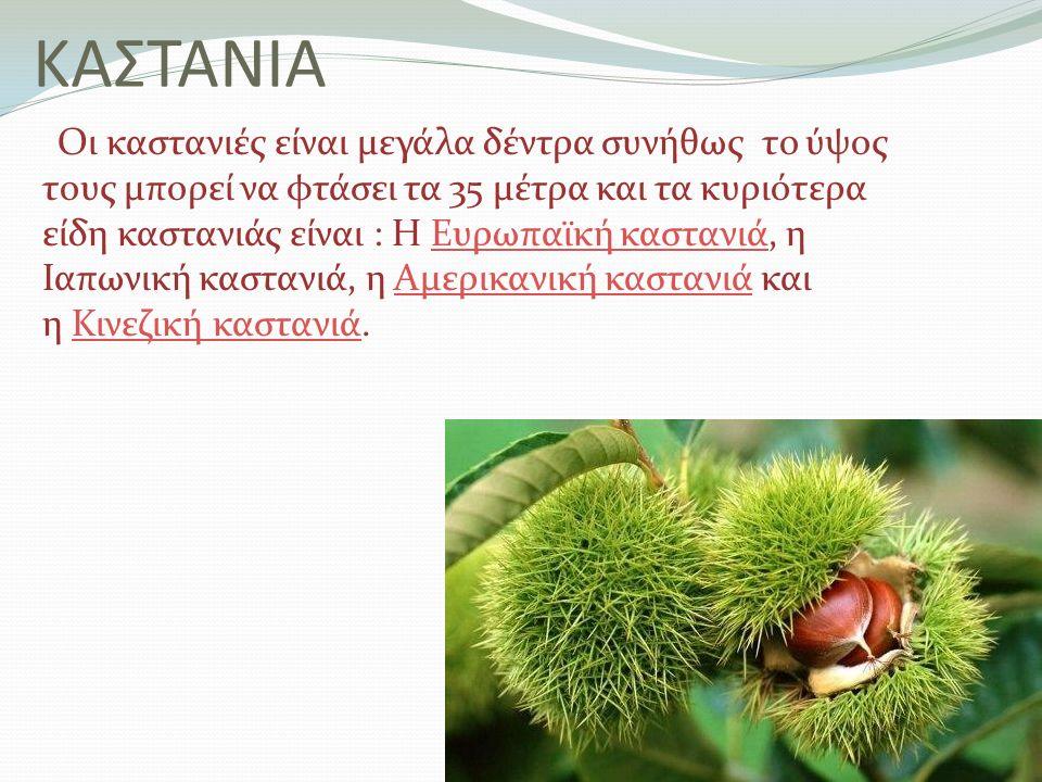 ΚΑΣΤΑΝΙΑ Οι καστανιές είναι μεγάλα δέντρα συνήθως το ύψος τους μπορεί να φτάσει τα 35 μέτρα και τα κυριότερα είδη καστανιάς είναι : Η Ευρωπαϊκή κασταν