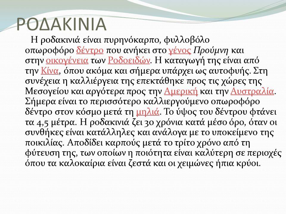 ΡΟΔΑΚΙΝΙΑ Η ροδακινιά είναι πυρηνόκαρπο, φυλλοβόλο οπωροφόρο δέντρο που ανήκει στο γένος Προύμνη και στην οικογένεια των Ροδοειδών. Η καταγωγή της είν