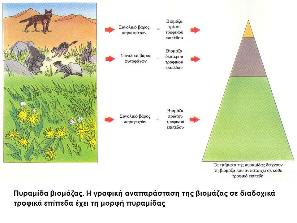 Πυραμίδα βιομάζας. Η γραφική αναπαράσταση της βιομάζας σε διαδοχικά τροφικά επίπεδα έχει τη μορφή πυραμίδας