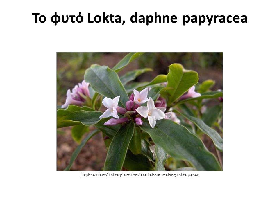 Το φυτό Lokta, daphne papyracea Daphne Plant/ Lokta plant For detail about making Lokta paper