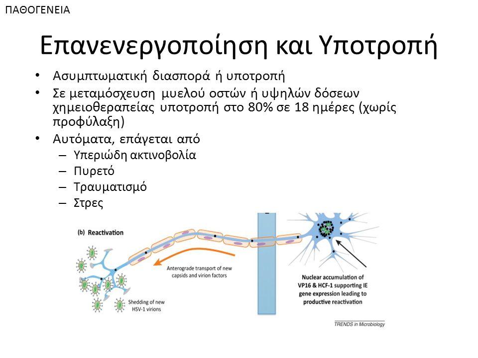 Επανενεργοποίηση και Υποτροπή Ασυμπτωματική διασπορά ή υποτροπή Σε μεταμόσχευση μυελού οστών ή υψηλών δόσεων χημειοθεραπείας υποτροπή στο 80% σε 18 ημ