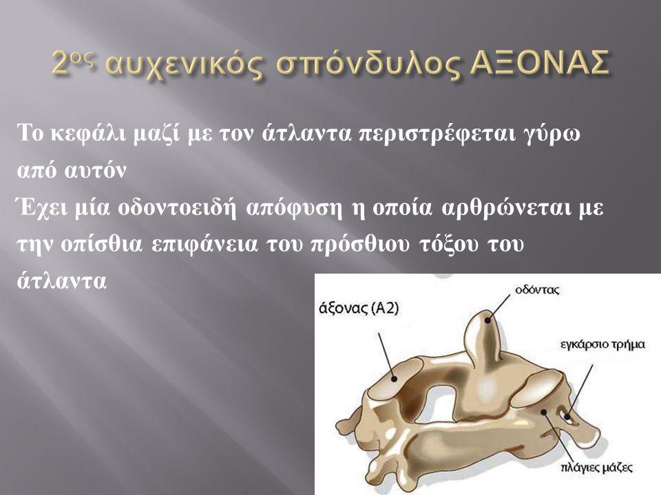 Το κεφάλι μαζί με τον άτλαντα περιστρέφεται γύρω από αυτόν Έχει μία οδοντοειδή απόφυση η οποία αρθρώνεται με την οπίσθια επιφάνεια του πρόσθιου τόξου
