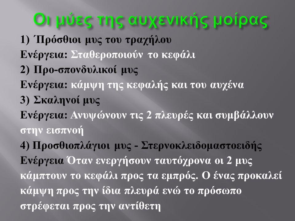 1) ΄Πρόσθιοι μυς του τραχήλου Ενέργεια : Σταθεροποιούν το κεφάλι 2) Προ - σπονδυλικοί μυς Ενέργεια : κάμψη της κεφαλής και του αυχένα 3) Σκαληνοί μυς