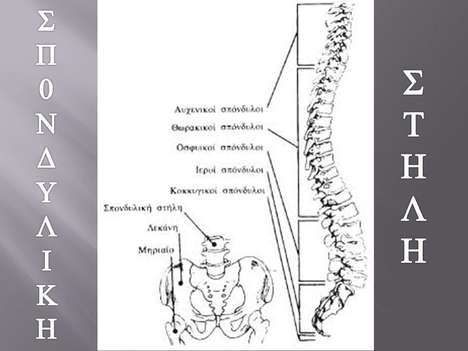 Να στηρίζει το κεφάλι  Να στηρίζει το κεφάλι  Να συνδέει άνω με κάτω άκρα  Να στηρίζει τον κορμό  Να προφύλάσσει τον νωτιαίο μυελό και τις ρίζες των νεύρων