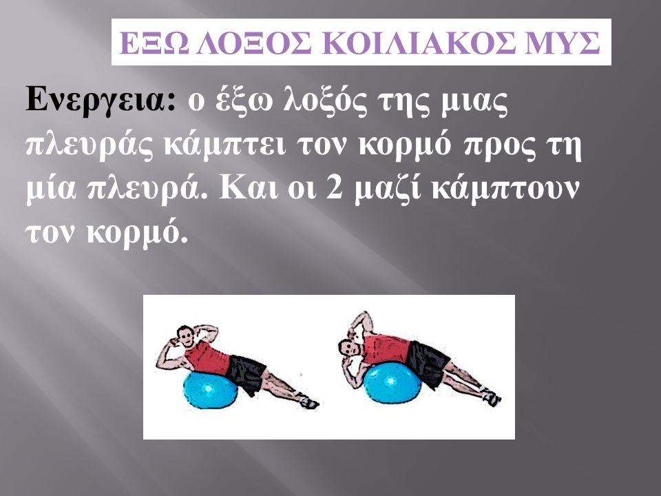 Ενεργεια : ο έξω λοξός της μιας πλευράς κάμπτει τον κορμό προς τη μία πλευρά. Και οι 2 μαζί κάμπτουν τον κορμό.
