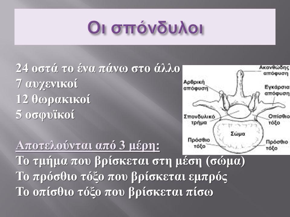 24 οστά το ένα πάνω στο άλλο 7 αυχενικοί 12 θωρακικοί 5 οσφυϊκοί Αποτελούνται από 3 μέρη : Το τμήμα που βρίσκεται στη μέση ( σώμα ) Το πρόσθιο τόξο πο