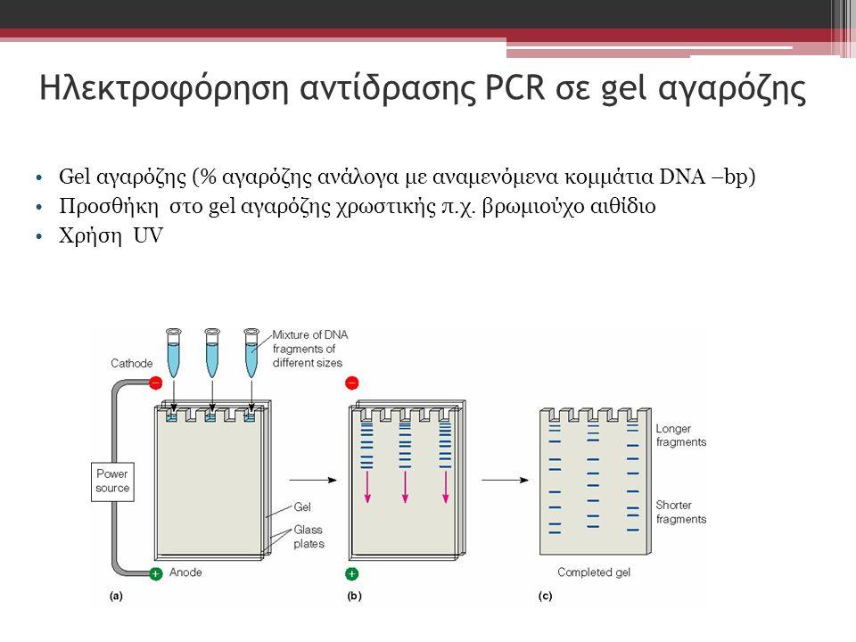 Ηλεκτροφόρηση αντίδρασης PCR σε gel αγαρόζης Gel αγαρόζης (% αγαρόζης ανάλογα με αναμενόμενα κομμάτια DNA –bp) Προσθήκη στο gel αγαρόζης χρωστικής π.χ.