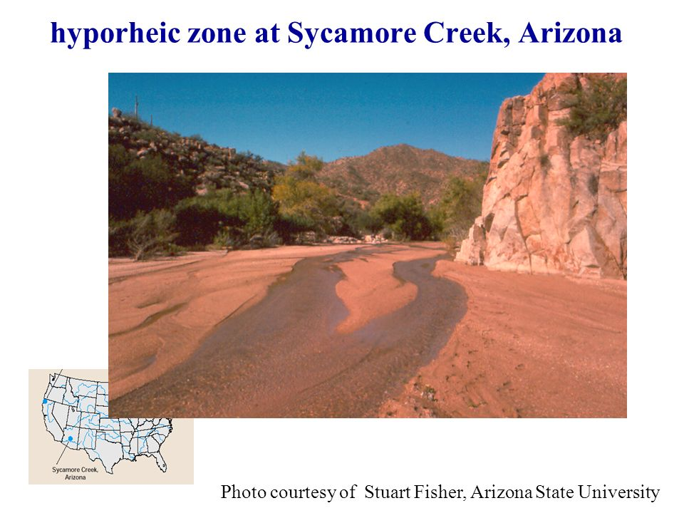 hyporheic zone at Sycamore Creek, Arizona Photo courtesy of Stuart Fisher, Arizona State University