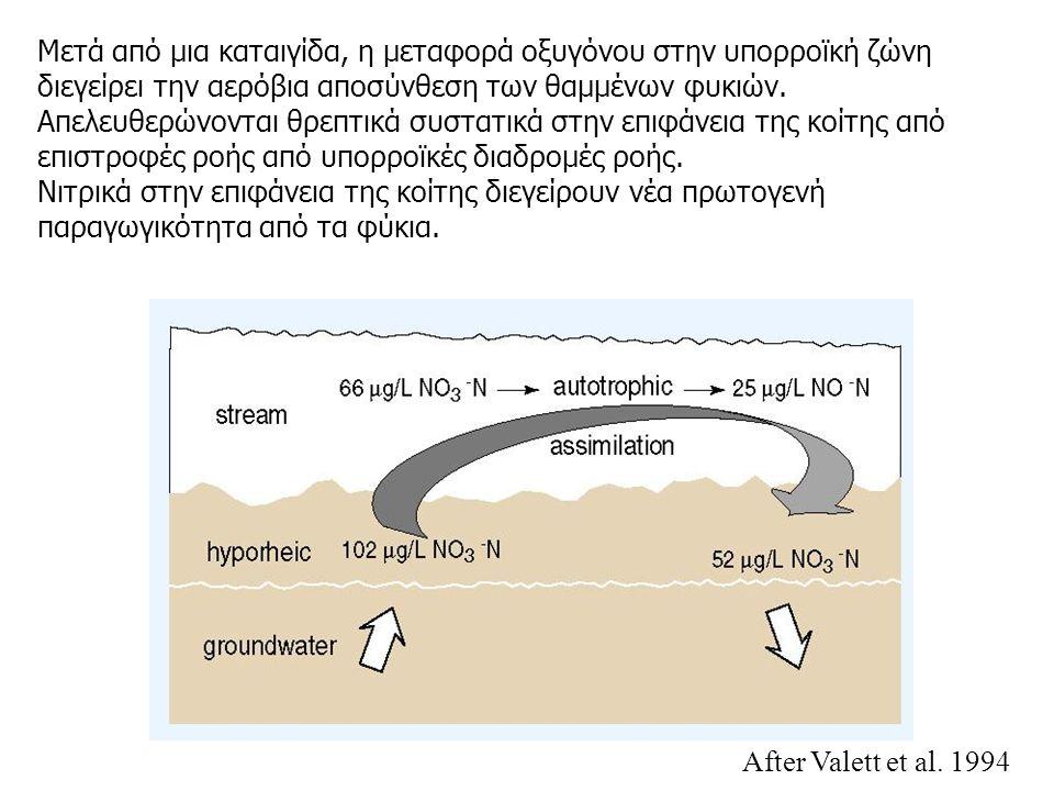 Μετά από μια καταιγίδα, η μεταφορά οξυγόνου στην υπορροϊκή ζώνη διεγείρει την αερόβια αποσύνθεση των θαμμένων φυκιών.