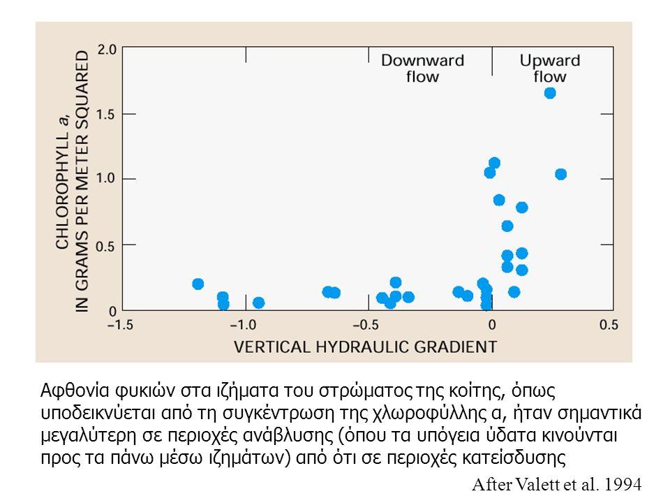 Αφθονία φυκιών στα ιζήματα του στρώματος της κοίτης, όπως υποδεικνύεται από τη συγκέντρωση της χλωροφύλλης α, ήταν σημαντικά μεγαλύτερη σε περιοχές ανάβλυσης (όπου τα υπόγεια ύδατα κινούνται προς τα πάνω μέσω ιζημάτων) από ότι σε περιοχές κατείσδυσης After Valett et al.
