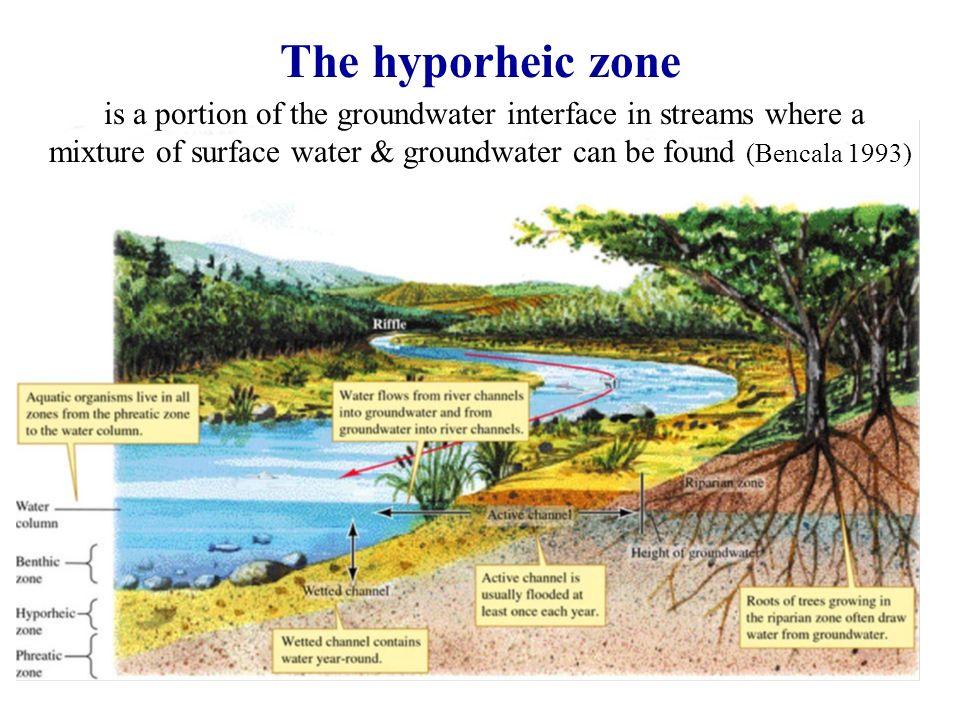 The hyporheic zone Στο στρώμα της κοίτης και όχθες των ρεμάτων, το νερό και οι διαλυμένες ουσίες μπορούν να ανταλλάσσονται σε δύο κατευθύνσεις σε όλη την κοίτη.